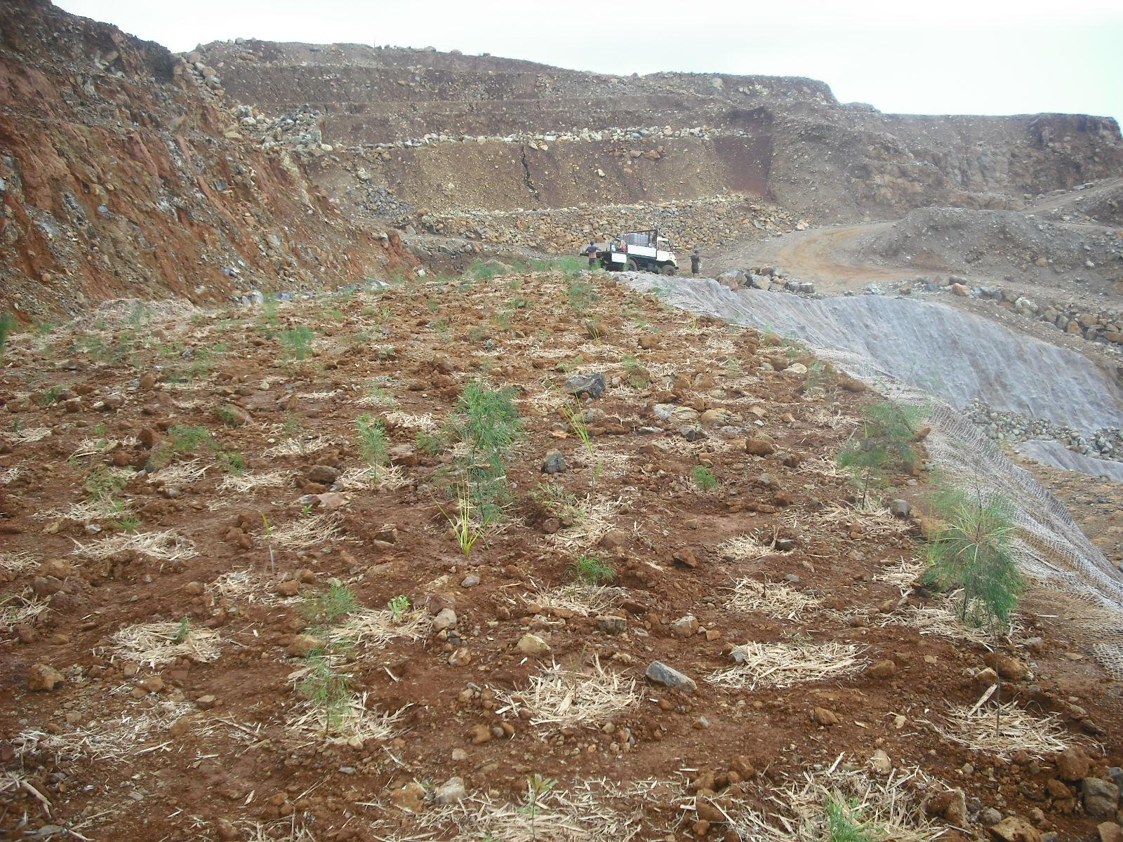 Plantation d'arbres sur maquis minier (Kaala-Gomen, NC)